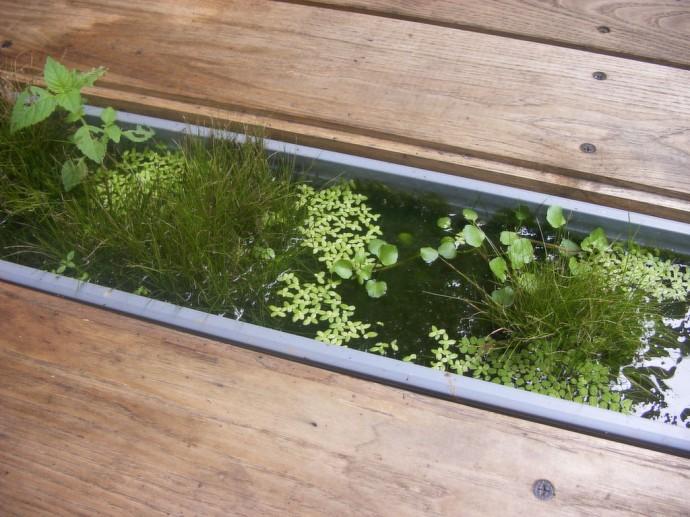 植物や生きものの力で浄化する「エクセルギービオトープ」
