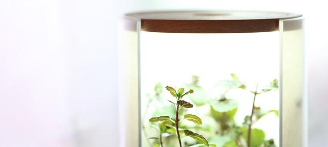 デジタルガジェットに疲れた時に!自宅で始める水耕栽培はどうだろう