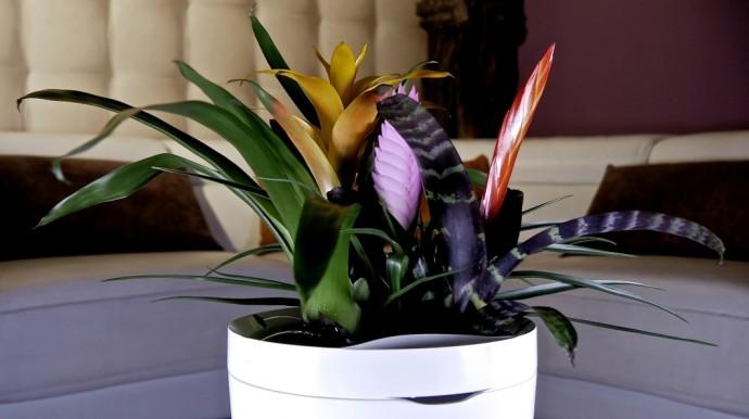 花の水やりも管理も「スマート鉢植え」に任せてしまえばいい!