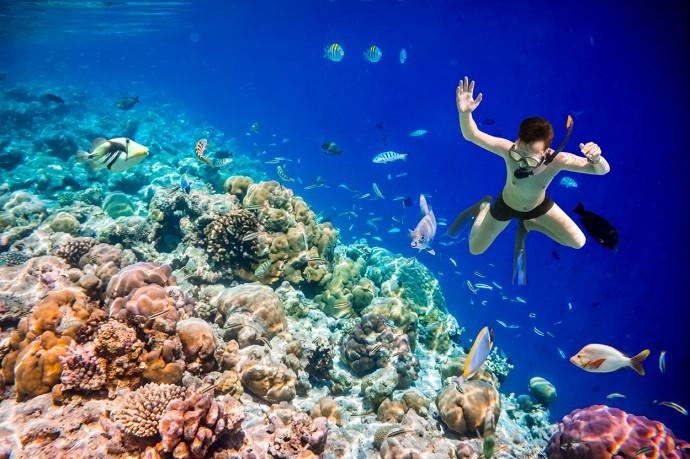 新しい海底地質調査の方法はイルカにも優しいらしい