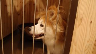 ペットショップは動物を売らない ?保護動物を譲渡する新しい試み
