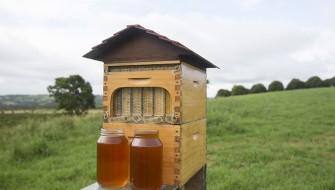 画期的すぎる「自動ハチミツ採取巣箱」で養蜂家も涙目必至!
