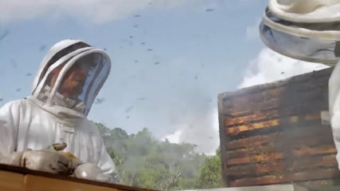 蜂蜜の採取は重労働