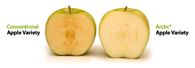 普通のリンゴとArctic Apples
