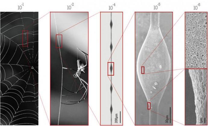 クモの糸の構造