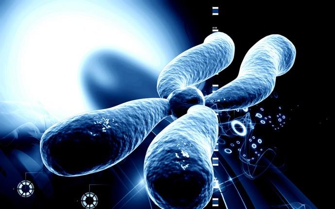 染色体のテロメアを伸ばす手法で「若返り」が本当にできてしまいそうだ