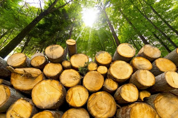 下水に間伐材…「不要なものを活用する」バイオマス発電の可能性