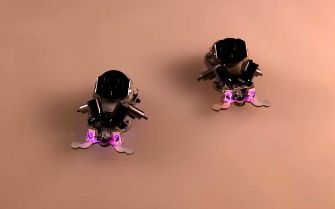 これ飼ってプログラミングの勉強したい!と思わせる虫型「知育」ロボット