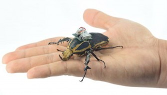 サイボーグビートル!? 昆虫を操縦できるようになるのかも
