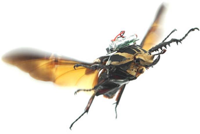 サイボーグビートル 昆虫