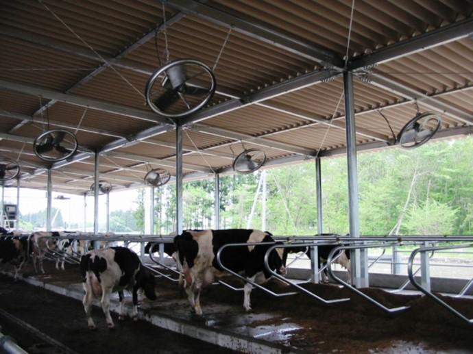 牛のための扇風機!? 農畜産用「DCスマートファン」がエコで有能