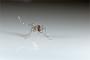「蚊に刺されやすい遺伝子」英研究で判明