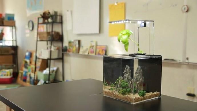 水槽なのに水を替えない!? 植物とLEDをつかった小さなエコシステム
