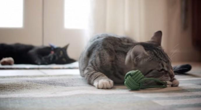 ネコもじゃれる!充電もできる倍速ケーブルがクラウドファンディングで話題に
