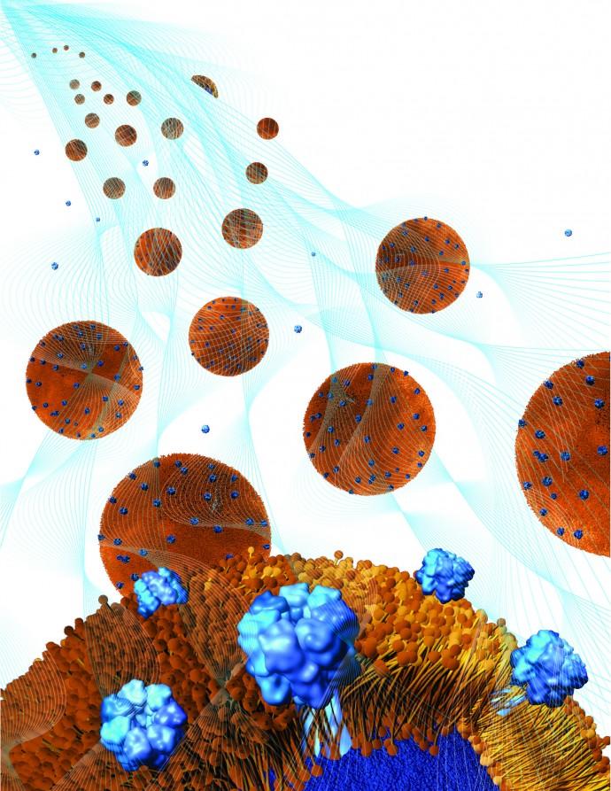 ナノスポンジを含んだジェルが大活躍!? 抗生物質が効かないMRSAを駆逐する