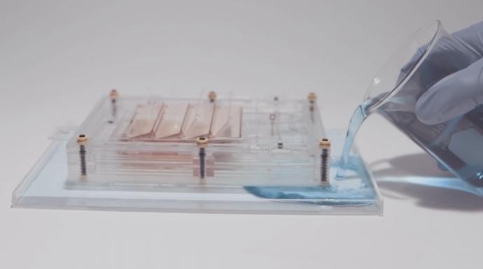 蒸気とバクテリア10