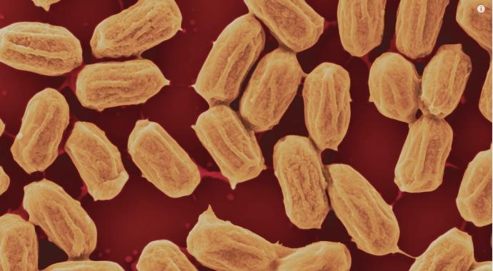 蒸気とバクテリア8