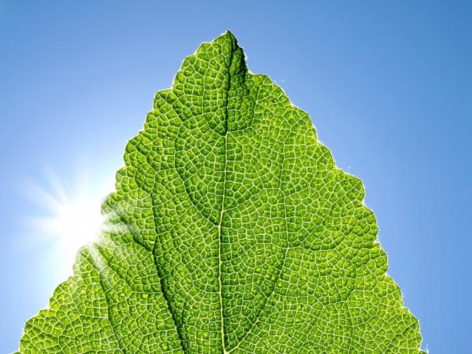 過熱する「人工光合成」技術開発!真のクリーンエネルギー社会へ導くか