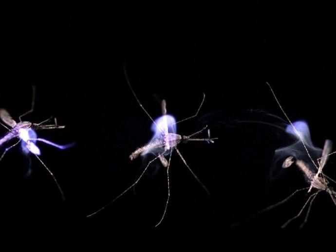 間合いに入ったら瞬殺・・・蚊を打ち落とすレーザーがいよいよ製品化?