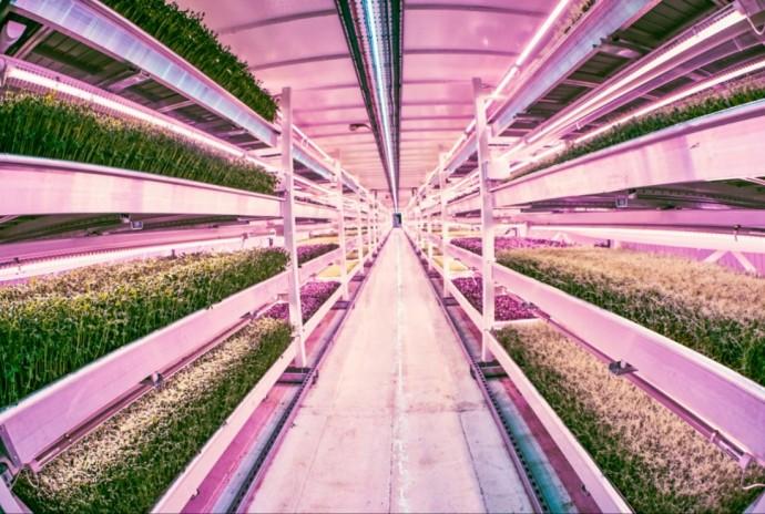 ロンドンの地下に実在する最新LED技術を駆使した野菜農園