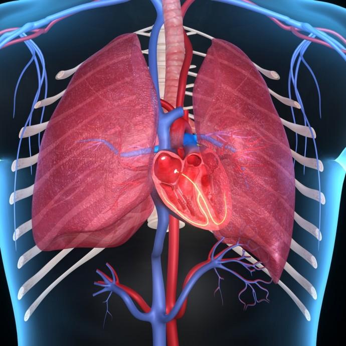 医療の課題を解決する新たなアプローチ!3Dプリンターで臓器の立体模型を作る技術