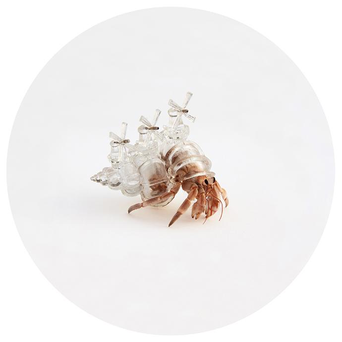 「3Dプリンター製の殻」で暮らすオシャレな次世代ヤドカリ