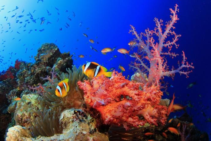 海から有害物質を取り除くための「合成サンゴ」