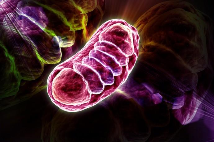 再生医療の扉を開く?ミトコンドリア病の幹細胞治療へステップ