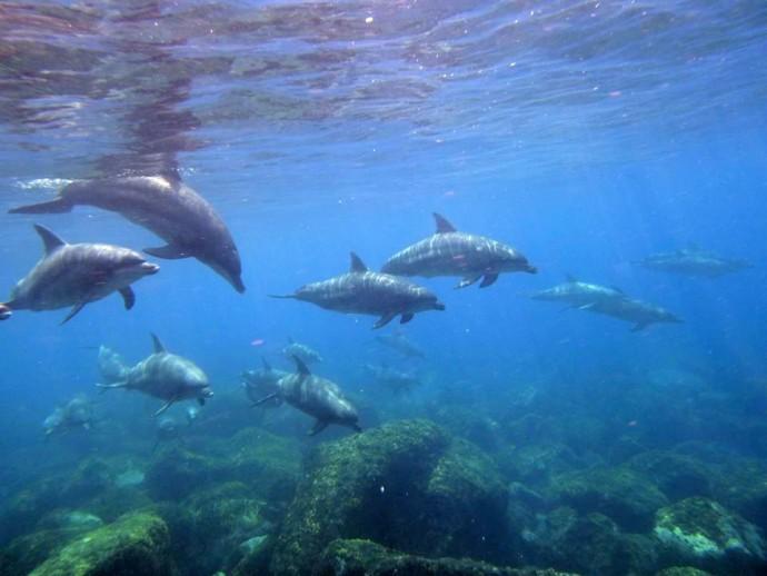 群れで行動するイルカに会うことも多い(写真:友人許可済み)