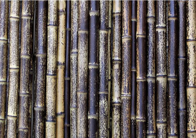bamboocar