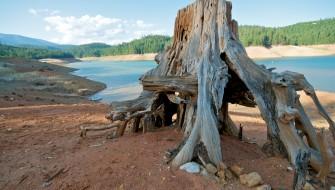 人類が登場したせいで地球上の樹木が半減した?