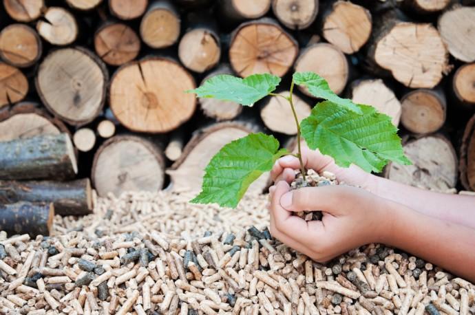 豪州の小都市に学ぶ、木質バイオマス・ガス化事業が創る未来