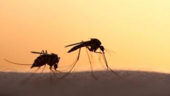 蚊 マラリア