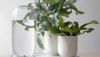 #house #plants
