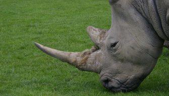 rhino-1094650_960_720