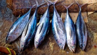 tuna-fish-tuna-fish-catch-scales-fin-fresh
